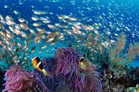 石垣島 海の生き物