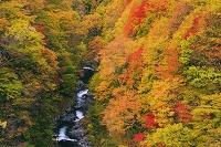 福島県 紅葉の中津川渓谷