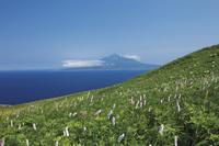 北海道 礼文島から望む利尻富士