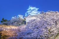 兵庫県 姫路城ライトアップ