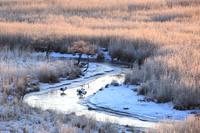 北海道 霧氷の釧路湿原と丹頂鶴のねぐら
