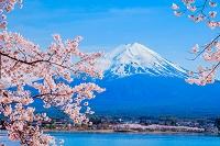 山梨県 富士山と河口湖とサクラ
