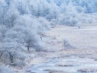 長野県 八島湿原の霧氷