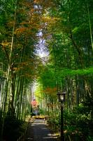 静岡県 修善寺温泉の竹林の小径