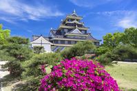 岡山県 ツツジ咲く岡山城
