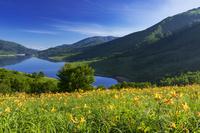 群馬県 野反湖とニッコウキスゲ