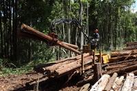 千葉県 市原市 林業 搬出