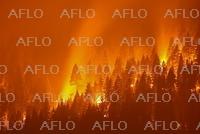 森林火災(山火事)
