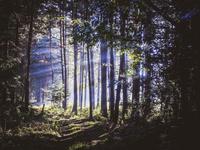 朝もやに斜光線が際立つ森の道