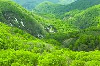 新緑の早春の森