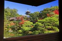 京都府 紅葉の仁和寺