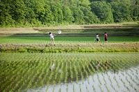 田んぼで遊ぶ日本人の子供