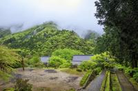 福井県 明通寺境内より小雨に煙る新緑