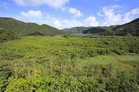 鹿児島県 奄美大島 マングローブ原生林