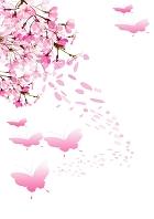 桜と蝶 イラスト