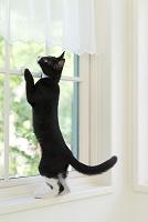 窓によじ登る猫
