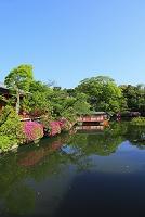 京都府 神泉苑 ツツジ咲く法成就池と龍頭船