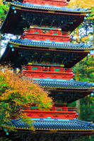 栃木県 日光東照宮 五重塔と紅葉