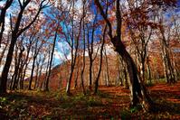 晩秋のブナ原生林
