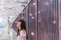 桜吹雪と日本人女性