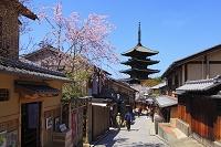 京都府 桜咲く八坂道と八坂の塔