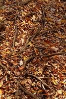 落葉と木の根