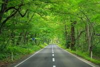 秋田県 森の中の道