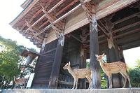 奈良県 奈良公園 南大門と鹿
