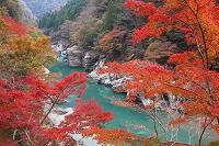 徳島県 祖谷渓