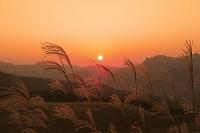 曽爾高原のススキの夕日