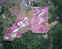 埼玉県 秩父市 羊山公園 芝桜