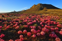 南アフリカ共和国 ファンリンスドープ近郊のマーチリリー