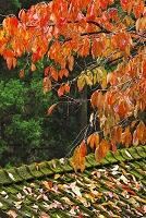 鹿児島県 紅葉と屋根(コケ)