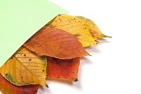 封筒に入れた枯葉