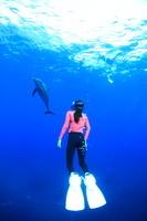 イルカ 御蔵島 海 ドルフィン