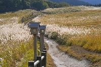 奈良県 曽爾高原 ススキ