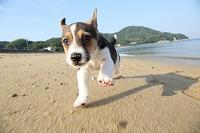 砂浜で遊ぶ子犬
