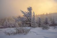 長野県 冬の美ヶ原 唐松の林と太陽