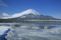 山梨県 フロストフラワーと富士山