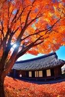 山中湖の紅葉と民家と太陽の光