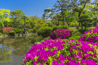 大阪府 つつじと大阪城