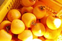 福島県 皮を剥いた柿