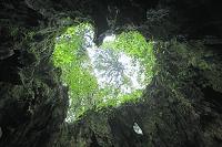 鹿児島県 屋久島 ウィルソン株の中から見上げるハート型