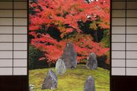 京都府 光明院 書院から見る波心庭の紅葉
