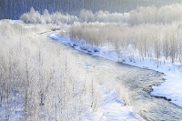 北海道 美瑛川と霧氷