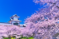 石川県 桜の石川門