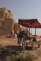 中国 ウイグル トルファン 高昌故城 ロバ車