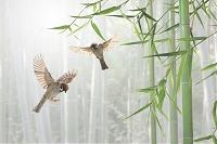 竹林で戯れるスズメ