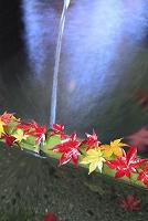京都府 青竹に落ちた紅葉と手水