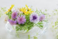ヤグルマギクとユリオプスデージーの花